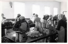Hoonah Crab Cannery Workers